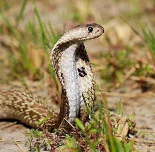 印度居民「抱怨」廁所里有蛇