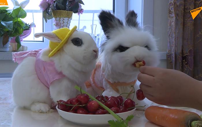中國美萌寵物兔走紅網絡