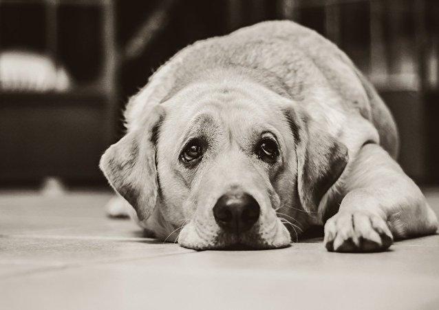 家犬与狼之间的不寻常差异被发现
