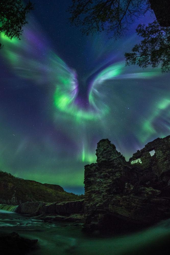 俄羅斯攝影師亞歷山大·斯傑潘年科 的作品Aurora is a bird
