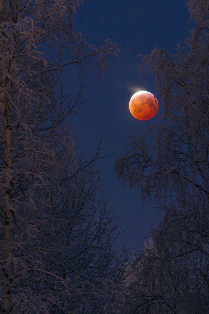 芬蘭攝影師Keijo Laitala 的作品Bloodborne