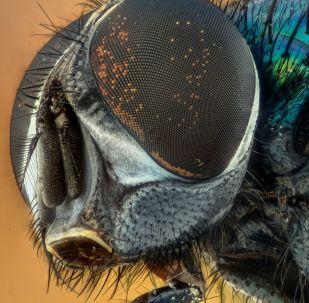 """""""光子-M""""生物卫星所携果蝇在太空发生变异并开始活跃繁殖"""