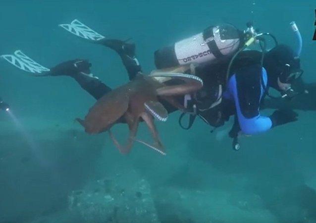 一名潛水員在日本海被巨型章魚糾纏不休