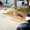 貓咪跑酷:追鳥時的驚人跳躍