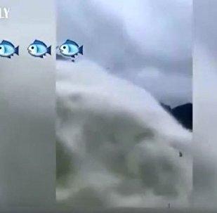 中國千島湖水漲將魚拋到空中