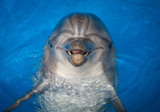 中國醫生將前往俄索契學習海豚療法治療兒童自閉症