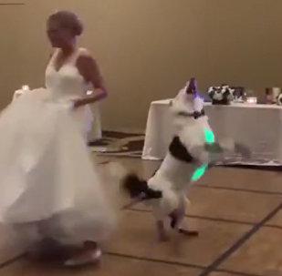 客人們對新娘與狗狗配合默契的舞蹈大加贊賞
