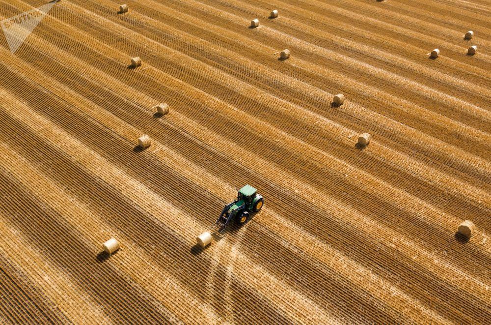 在克拉斯諾達爾邊疆區的田野里準備乾草卷