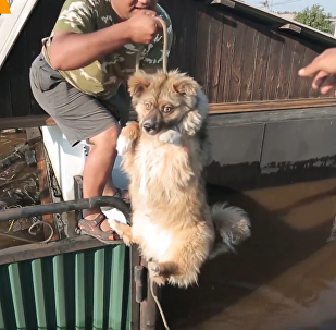 俄救援队拯救伊尔库茨克州洪灾中被困动物