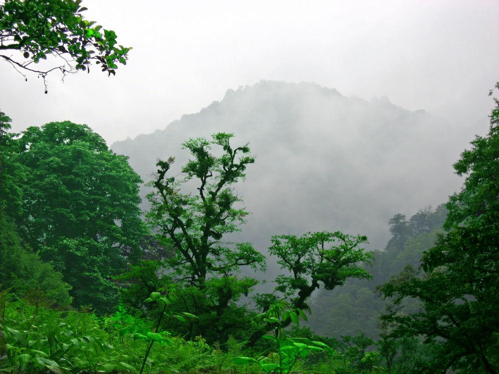 伊朗吉兰省的阔叶林