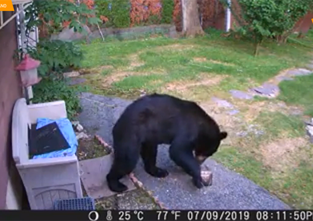 狗赶走隔壁花园来的熊