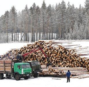 克拉斯诺亚尔斯克边疆区锯材仓库