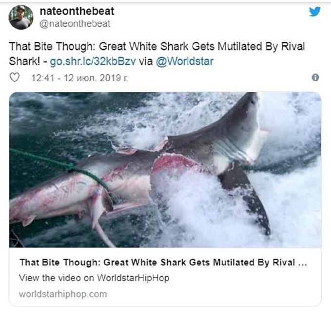 大白鯊之致命格鬥突襲上網