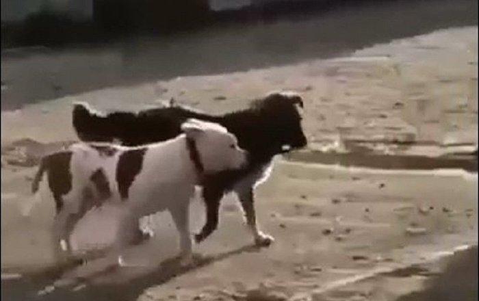 流浪狗解救純種狗