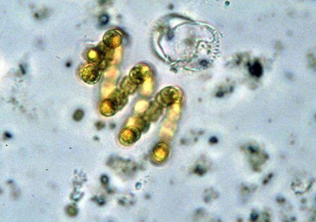 专家告诉你家中哪里细菌最多