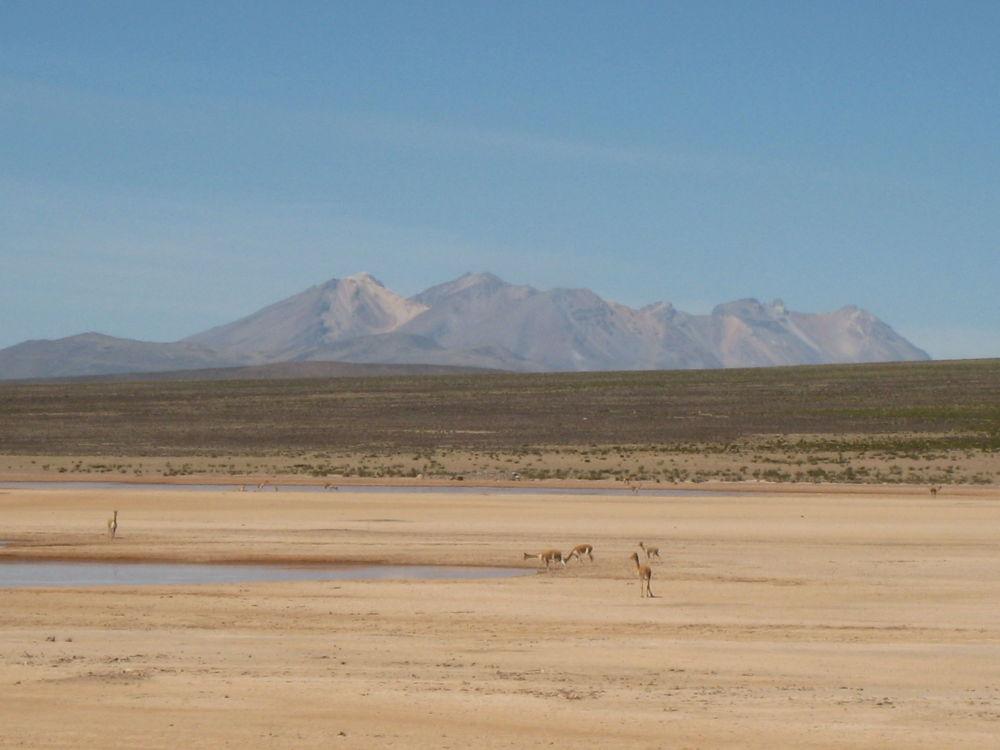 安第斯山脈阿爾蒂普拉諾高原