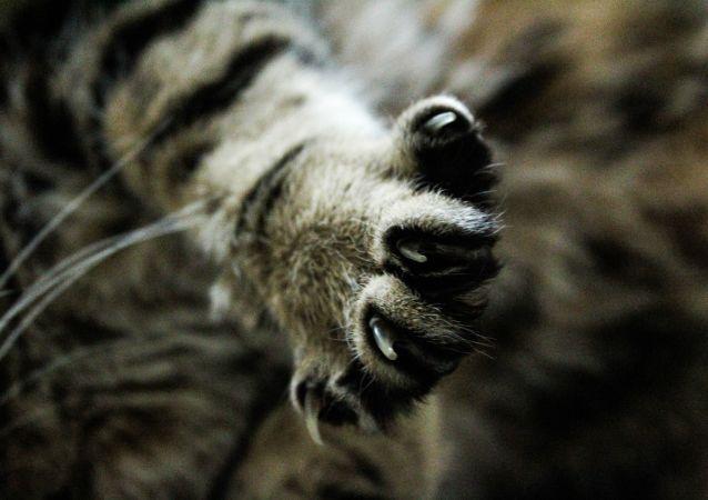 莫斯科發現一隻世界上最憂鬱的貓