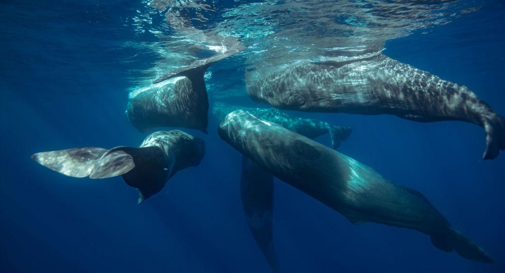 蘇格蘭抹香鯨胃中發現一百公斤垃圾