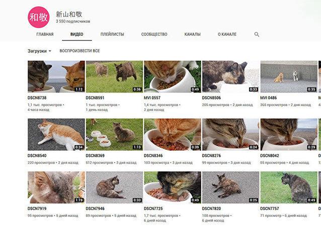 一名日本人在YouTube發佈2萬多個貓視頻