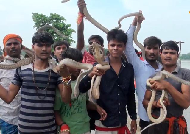 印度欢庆传统蛇节