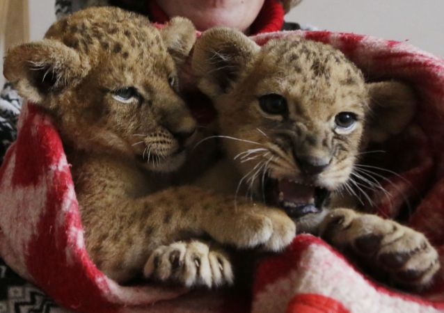 克里米亚威胁要对提供游客和动物照相的摄影师提起刑事诉讼