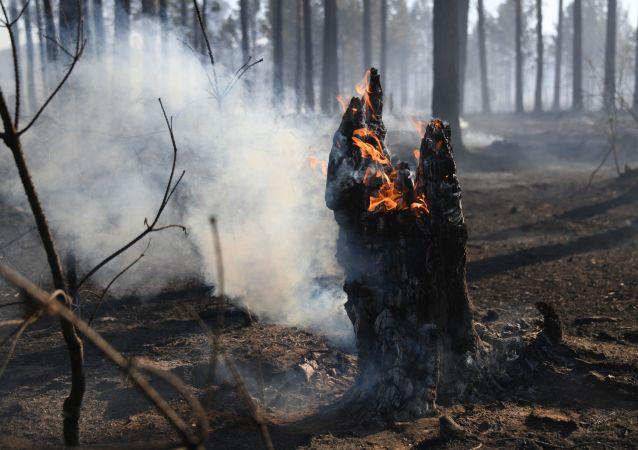 俄總理:俄森林大火災情複雜