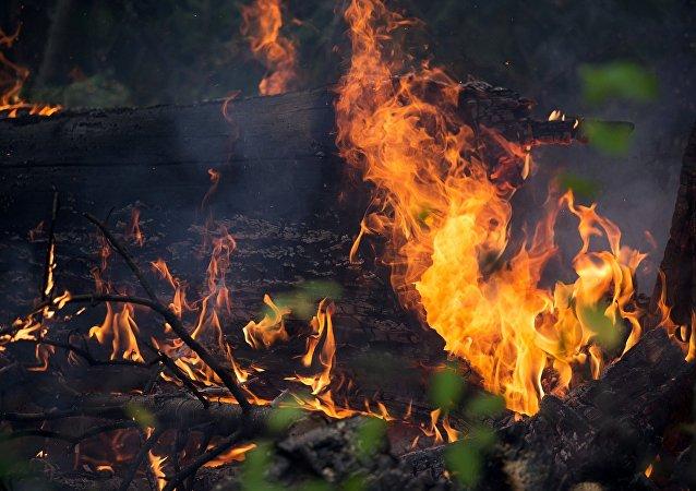俄联邦航空护林局:俄林火过火面积已增加近八千公顷