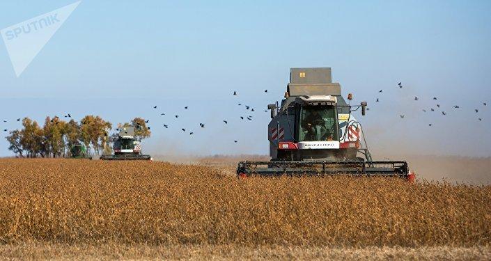 中国可购买俄罗斯各地大豆