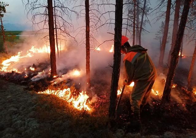 俄航空護林局:過去一天俄羅斯撲滅30多起森林火災