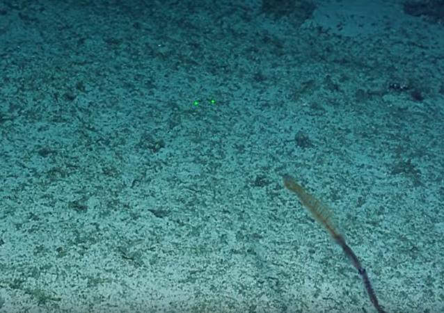 太平洋海底極罕見物體首次被視頻拍到