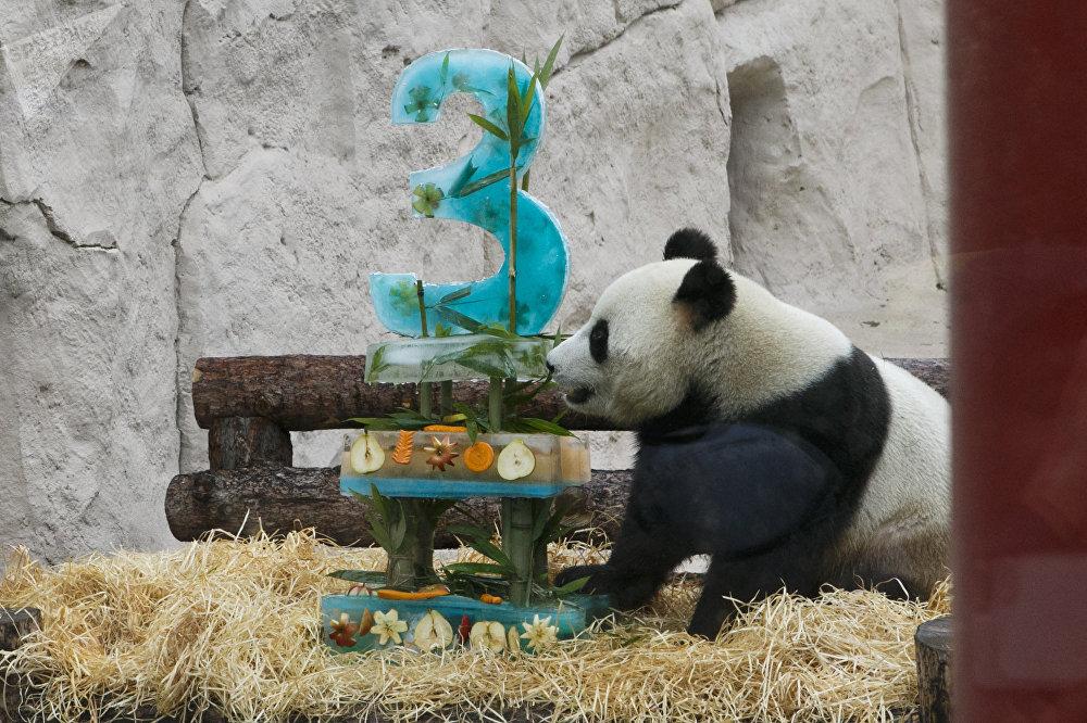 随后工作人员将一盒插着3数字的冰镇蛋糕、竹子、苹果送进笼内。