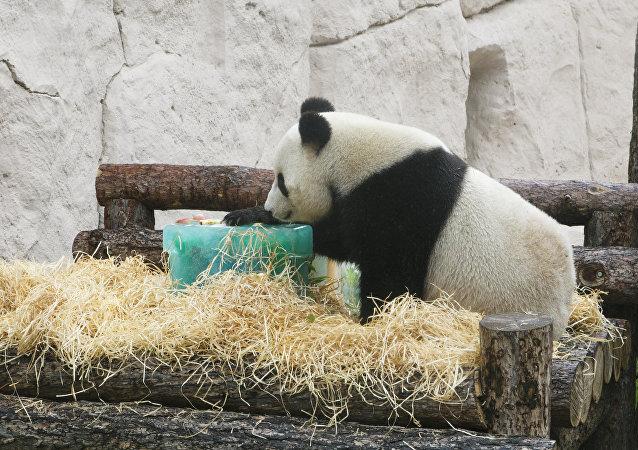 大熊猫如意