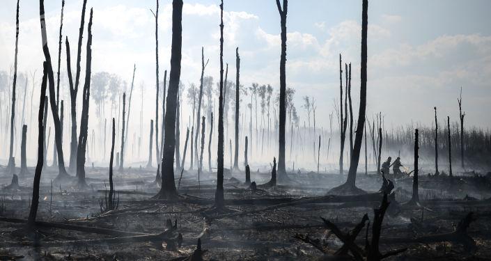 俄航空护林局:俄境内扑灭50多处森林火灾