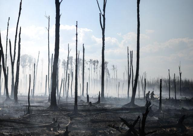 俄羅斯森林火災面積減少3800公頃