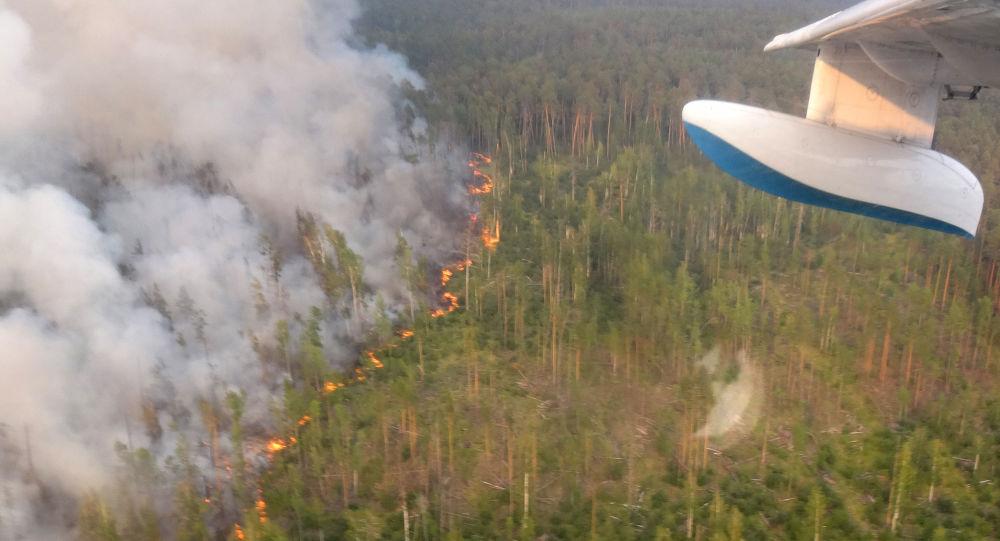 俄航空护林局:俄境内扑灭49处森林火灾