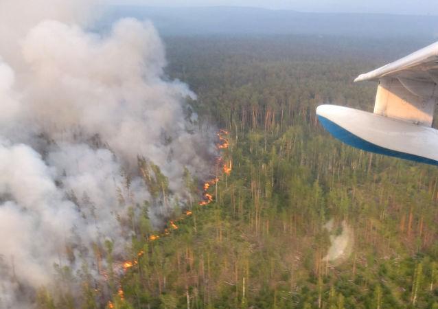 俄航空護林局:俄境內撲滅49處森林火災