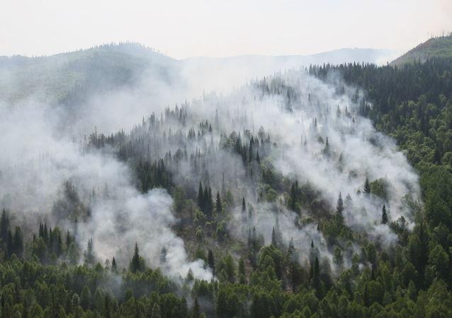 俄国防部航空队一昼夜扑灭9万多公顷的森林大火