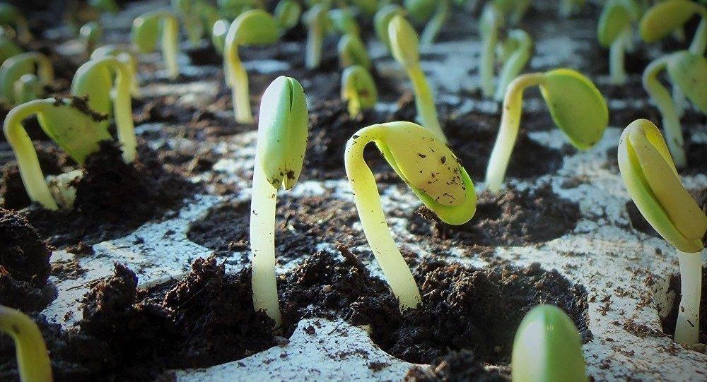 赤道幾內亞總統在索契種下第3000萬棵樹苗