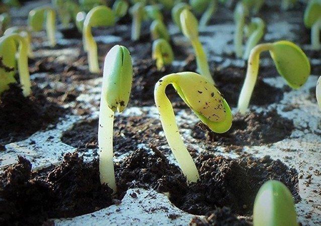 赤道几内亚总统在索契种下第3000万棵树苗