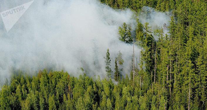 西伯利亚林火面积数周以来首次开始缩减
