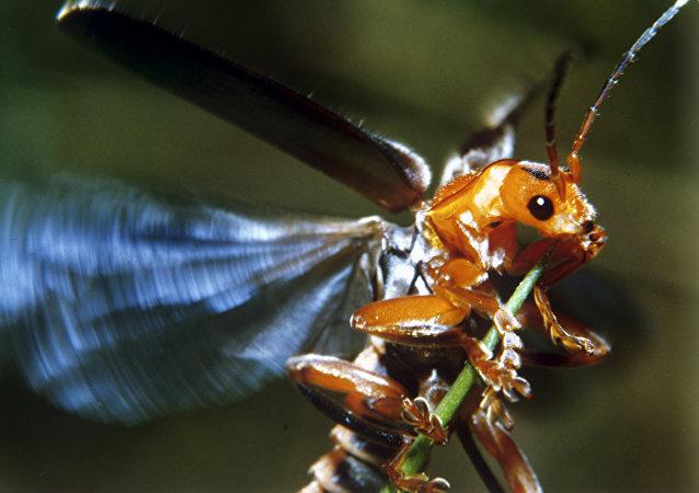 昆虫脑导弹:战争的理想武器