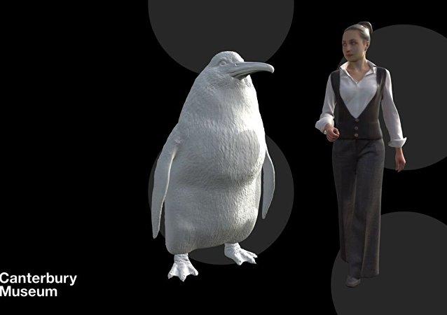 新西兰发现和人一样高的企鹅