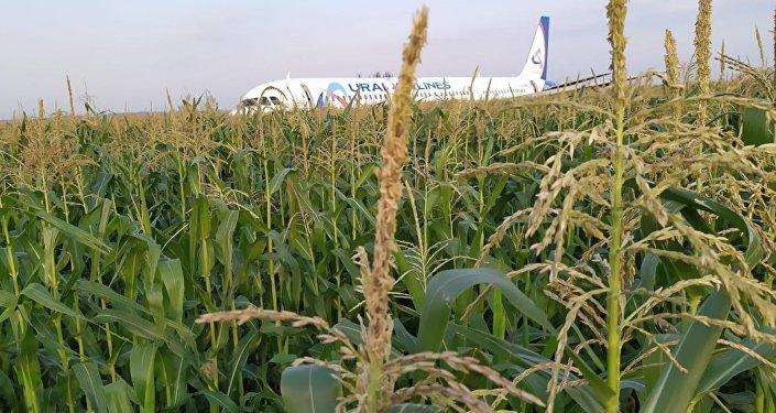 A321客机迫降致10人受伤 (视频)