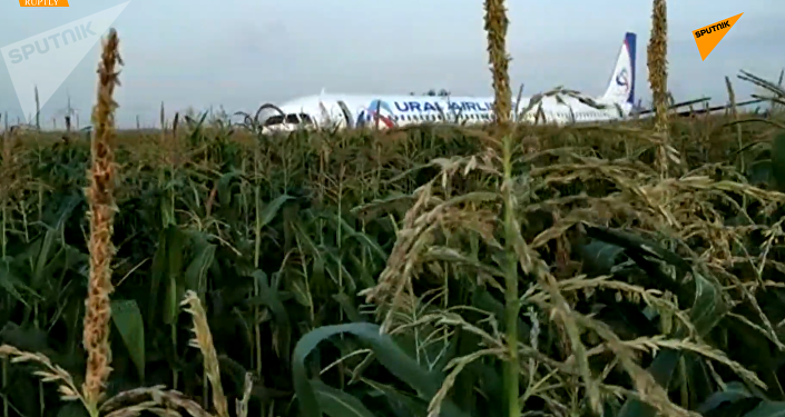 俄A321客机迫降致23伤