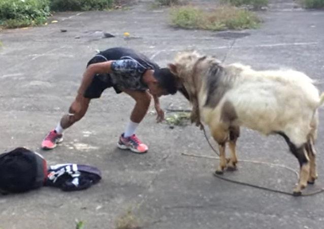菲律宾男子挑战山羊