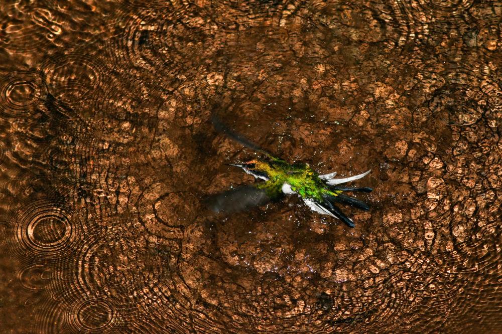 卷羽鵜鶘翼下:鳥類攝影師獎最佳作品