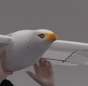 智能飞鸟亮相北京