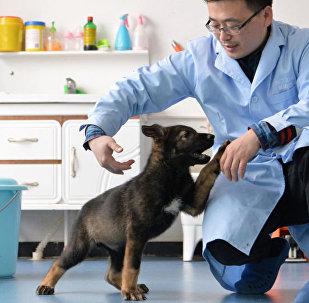 """中国首只警用工作克隆犬""""昆勋"""" 正式入警"""