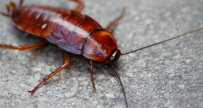 科学家:昆虫数量正急剧减少