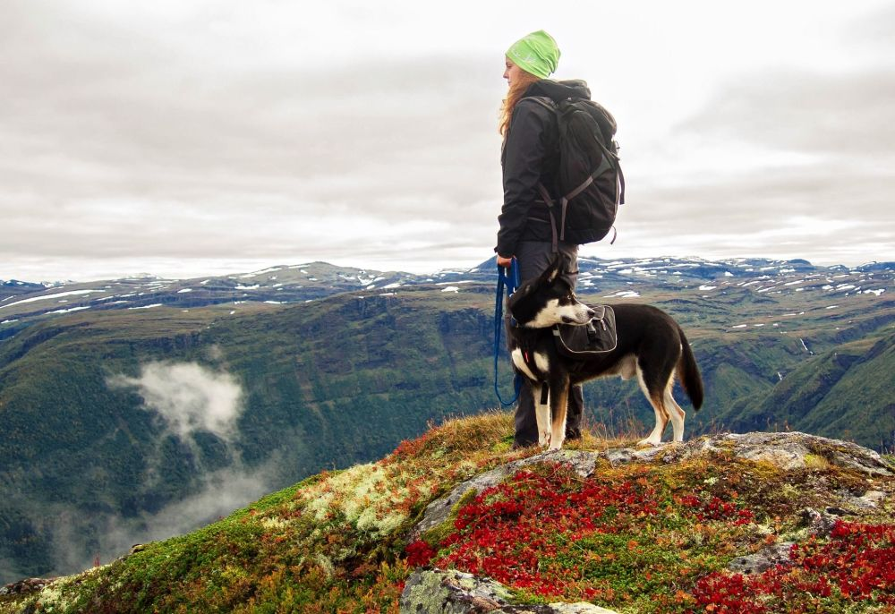 挪威山脉中带着狗的游客
